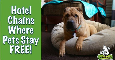 UPDATED: 6 Pet Friendly Hotel Chains Where Pets Stay Free