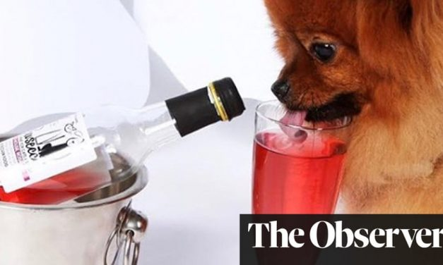 Pawsecco, anyone? Millennials splurge on pampered pets