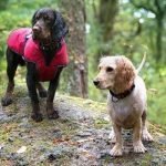 Rugged Dog Lifestyle Brand Is Searching For 5 Canine Models