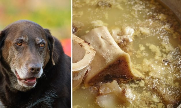 Is Bone Broth is The Ultimate Superfood For Older Dogs?