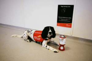 Scent Detection Dogs Are The Newest Technology In Stopping The Spread Of Malaria