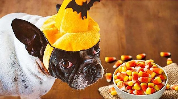Halloween: Keep A Close Eye on the Treats, Pets