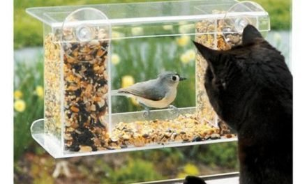 Found it at Wayfair – Window-Mount See-Through Tray Bird Feeder