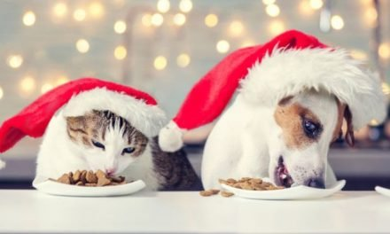 A pet owner's guide to surviving the festive season