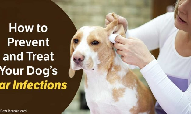 Put This in Your Dog's Ears to Nix Nasty Infections