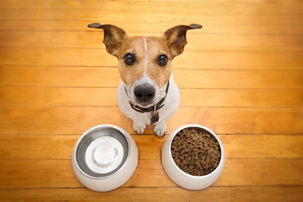 What Are the Signs of a Truly Hungry Dog?