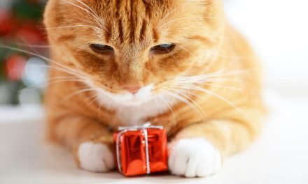 Your Pet Deserves a Present More Than Anyone Else