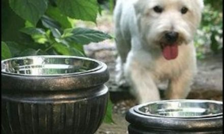Put dog bowls in planters for a nice look for the patio!
