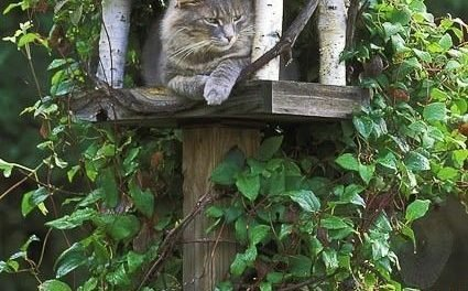 Cathouse – been reluctant to put up a bird feeder because the cats are such successful birders.  Now I can put up cat houses! @julie Palmer