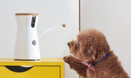 Sponsored: The best ways to spy on your dog or cat