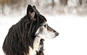 10 Signs Your Dog May Be Ready To Cross The Rainbow Bridge