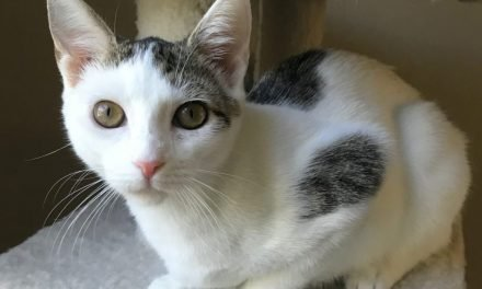 Your Afternoon Animal Fix – AdoPtville