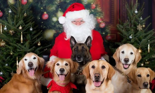 8 Pro Tips for Getting Your Pet to Pose With Santa
