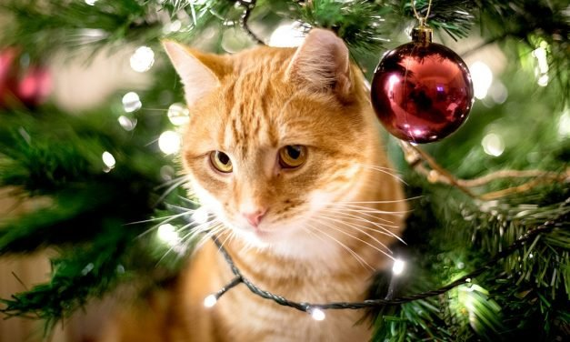 All the Holiday Hazards Every Pet Owner Should Know About