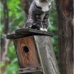 magical-meow:  Bird House by Para