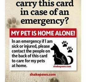 If I was single and my animals unattended, you bet I would carry a card like this – My Pet is Home Alone emergency card – I also have an