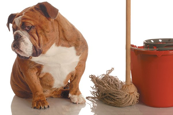 How to Deal With Your Dog Peeing in the House