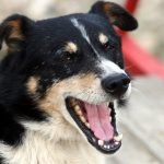 15 Things Your Dog Wants You To Know