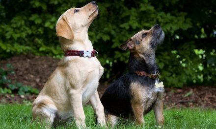 5 Reasons Your Dog Needs a Friend