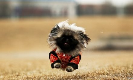 Once denounced as bourgeois vanity, pets are big business in China