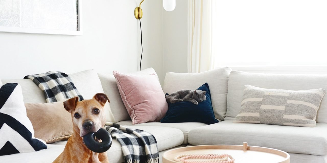 Pet Supplies That Actually Look Good In Your Home