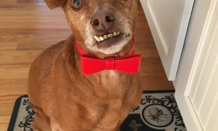 Dug Up at Dogster: 10 New Dog Dental Teeth Cleaning Products