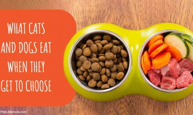 Eye-Opening Study Confirms the Healthiest Pet Food