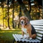 Is It Safe To Microchip Your Dog?