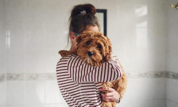 Losing a pet in a breakup is the hardest part of splitting no one talks about—here are tips to deal