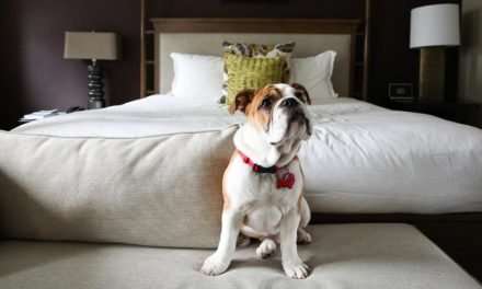 Pet-friendly hotels roll out the red carpet for your favorite traveling companion