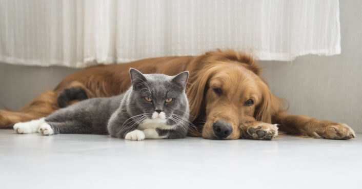 7 ways to be a sustainable and eco-friendly pet owner