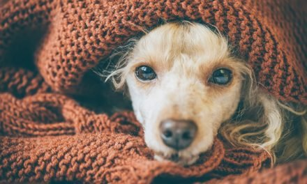 My Dog Ate Ibuprofen: Now What?