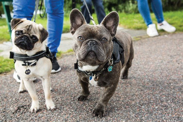 5 Dog-Walking Problems & Solutions