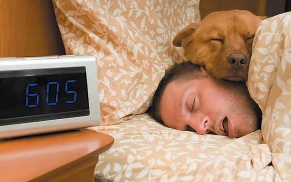 Why is My Dog Sleeping in Bed With Me? 10 Reasons