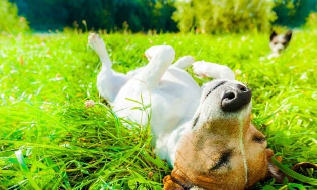 Sponsored: Grooming, medication, toys: It's time to spring clean — your pets