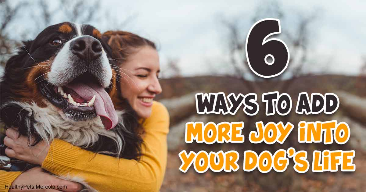6 Ways to Fill Your Dog's Life With Joy