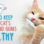Up to 80% of Cats Suffer This Permanent Condition by Age 3, Does Yours?