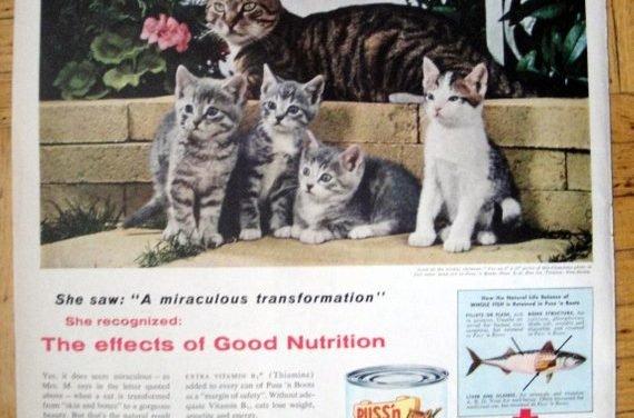 1956 Puss'n Boots Cat Food- Kittens Chandoha Photo-Original 13.5 * 10.5 Magazine Ad-Pet Food
