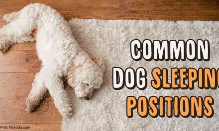 6 Dog Sleeping Positions and What Each Says About Your Dog's Mood