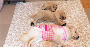Cuteness Roundup: These Dogs Absolutely Love Their Stuffed Toys