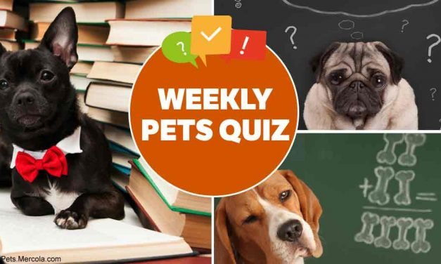 Weekly pet quiz — Vaccination, cat responses and pet food