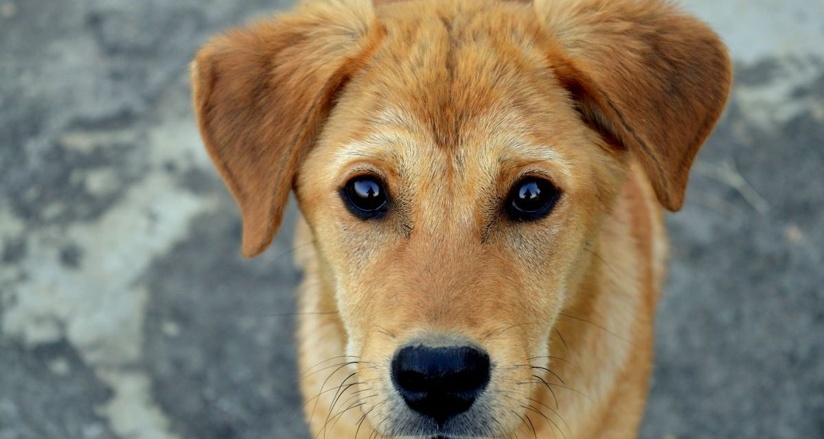Pet Industry Economics: What You Need to Know
