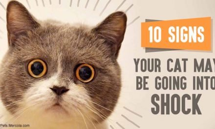 10 signs your cat may be going into shock