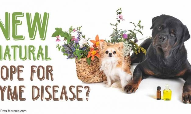 Simple new tool for eradicating resistant Lyme disease