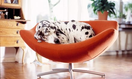 The 10 Best Apartment Dogs Might Surprise You