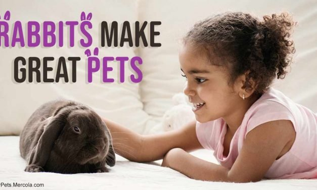 4 rules that can help make rabbits wonderful, happy pets