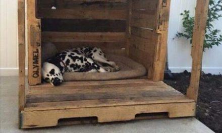New (never used) – Custom built by the maxx & macho dog house company houston tx
