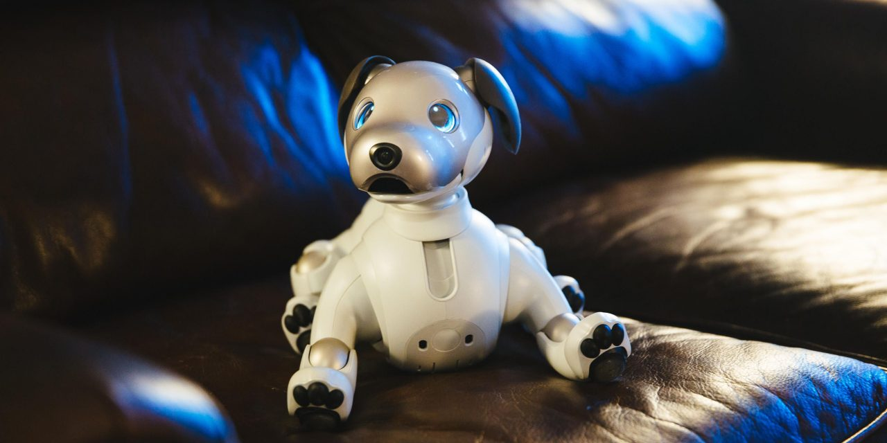How Aibo becomes a robot overlord, one home at a time – CNET