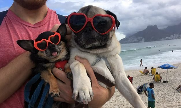 12 Things Every Person Who Wants to Travel with Their Dog Should Know