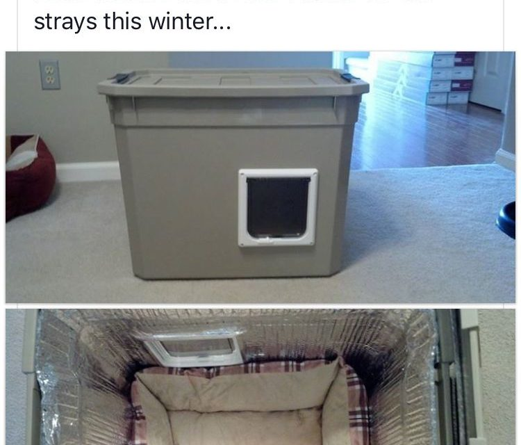 DIY safe house for stray cats in winter